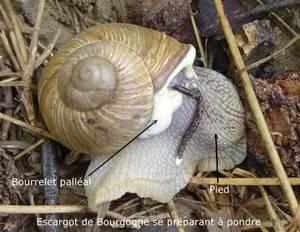 ramassage escargots 2017